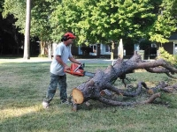 Emergency Storm Damage Tree Services