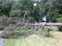 Storm Damage Tree Services - Before