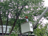 Stump Grinders Tree Service, Inc. Tree Trimming
