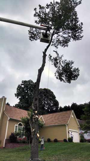 Tree Trimming and Pruning Services by Stump Grinders